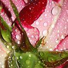 I like! by Kasey Cline