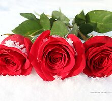 Rosa - Red Roses In Snow | Center Moriches, New York by © Sophie W. Smith