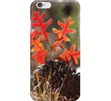 Oak Sapling iPhone Case/Skin