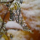 Snow topped autumn leaves by Felt4Ewe