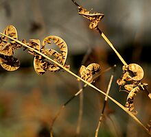 Fall Fern by Gerry Curry