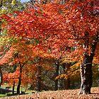 Autumn Splash by Patricia Montgomery