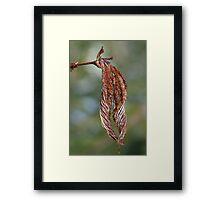 Frosted Leaf Framed Print