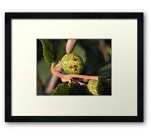 Ladybug Nursery Framed Print