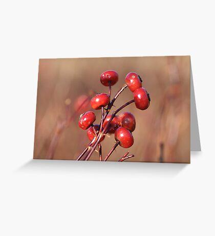 Winter Rosehips Greeting Card