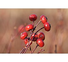 Winter Rosehips Photographic Print