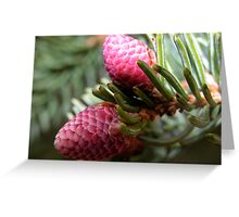 Spring Spruce Cones Greeting Card