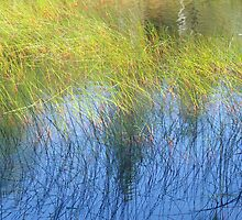 Fall Water Reeds by Gerry Curry
