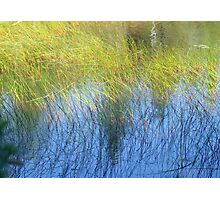 Fall Water Reeds Photographic Print