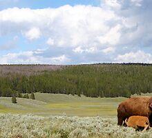 Bison Nursing by bigtiny