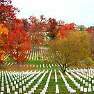 Arlington Fall  by Tracey Hampton