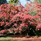 Red Leaves by Iani