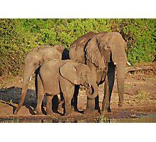 The Elephant Family, Chobe National Park, Botswana Photographic Print