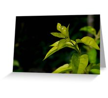 Beautiful Leaves Greeting Card