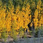 Autumn Trees-0353, near Granada, Spain by Zone8