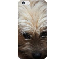 DON'T LOOK AT ME, I AM INNOCENT :) iPhone Case/Skin