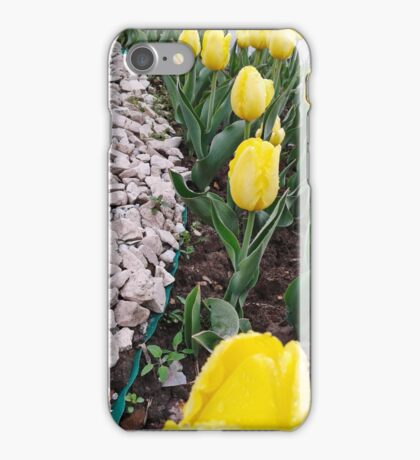Yellow tulips 2 iPhone Case/Skin
