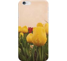 Yellow tulips 4 iPhone Case/Skin