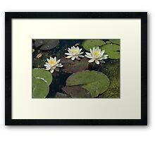White Lillies-0256 Walled Garden, Penrhyn Castle, Wales Framed Print
