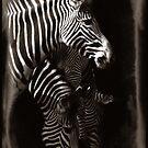 zed bras by Rob Smith