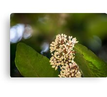 Flowers and Leaves Canvas Print