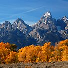 Grand Teton with autumn golden aspens by cascoly