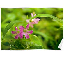 Details of Wild Flora in Taiwan Poster