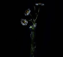 Wild flowers - lightpainted still life by Alexey Kljatov