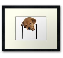 pocket dog Framed Print