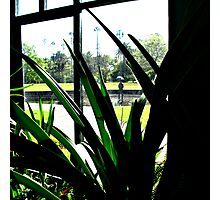 inside the glasshouse Photographic Print