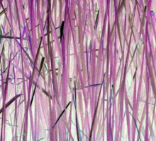 Purple Reeds 2-Available As Art Prints-Mugs,Cases,Duvets,T Shirts,Stickers,etc Sticker