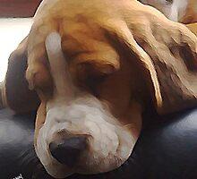 Sleepy Head by Alex Brown