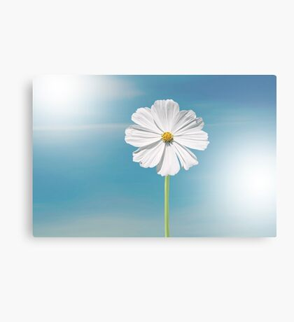 The beautiful white flower  Canvas Print