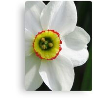 Daffy in My Garden Canvas Print