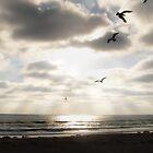 Days End by Nikki Collier