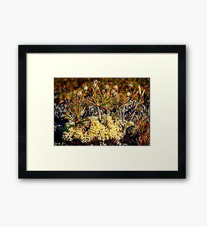 Minature Forest Framed Print