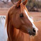 HORSE BEAUTY by Magaret Meintjes