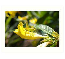 Grasshopper Hiding Art Print