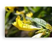 Grasshopper Hiding Canvas Print