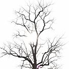 Cemetery Tree by Laurynsworld