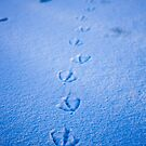 Footprints Through the Snow by R-Walker