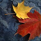 Maple Leaf Pair on Moody Grey Rock by Anna Lisa Yoder