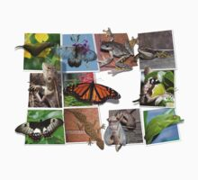Collage of Australian Native Wildlife, MENS by peterstreet