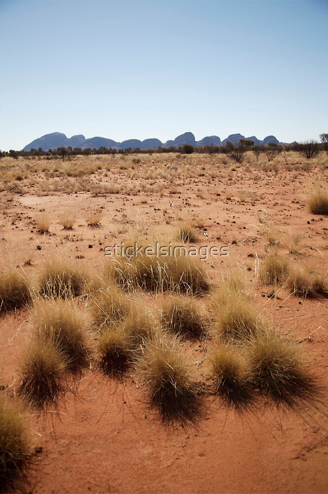 landscapes #153, desert grasses & kata tjuta by stickelsimages