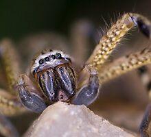 Arachnid by Pene Stevens