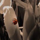 Lady Bug by Emjay01