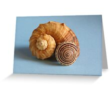 A shell and a snail Greeting Card