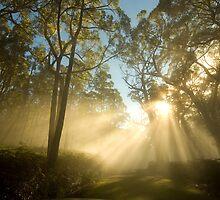Boroka Sun Stream by Underload