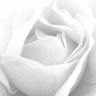 Rose Heart by Honor Kyne