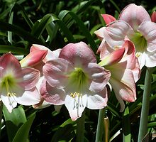 Flowers by Angel100706